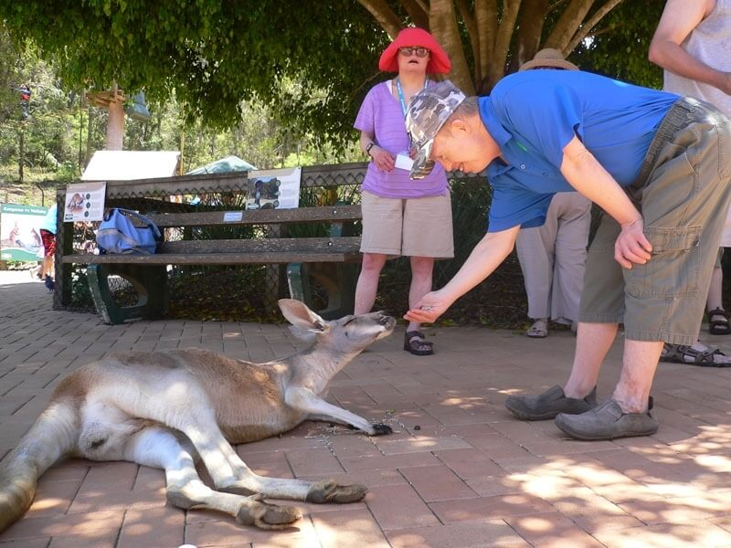 supported holiday - gold coast animal lovers queensland
